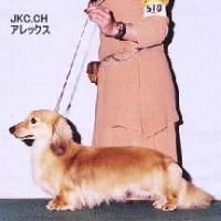 JKC/CHアレックス